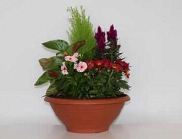 Pech Bleu : coupe obsèques 5 plantes